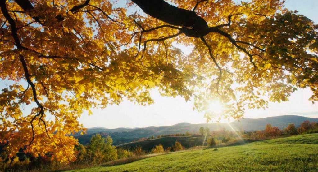 Autumn slendor landscape